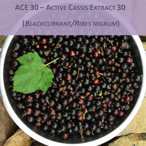 ACE 30 – ACTIVE CASSIS EXTRACT 30