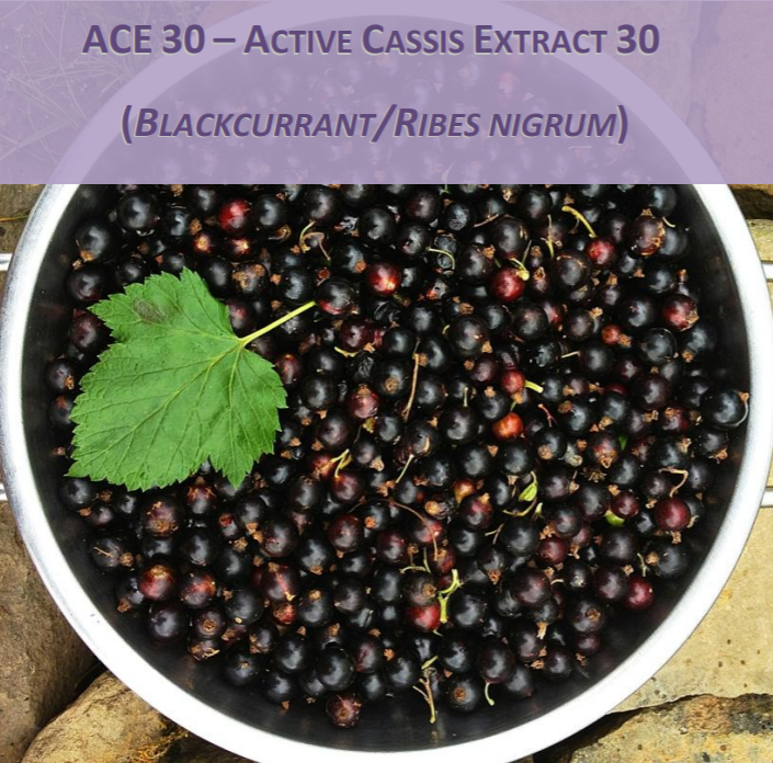 ACE 30 Active Cassis Extract 30